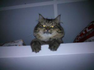 Cat eyes glowing in dark
