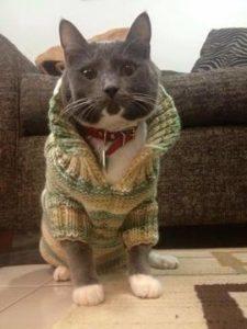 Cat wearing Sweater