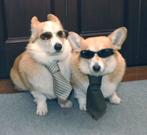 2 dogs wearing sunglasses and sitting side by side