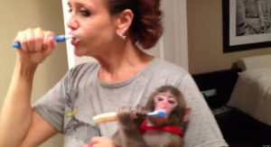 Woman and a monkey brushing their teeth