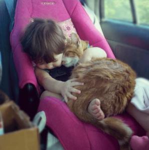 Kitten sleeping on a small girl inside a car
